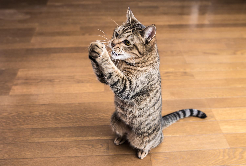 猫 ルーチン